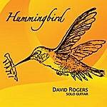 David Rogers Hummingbird