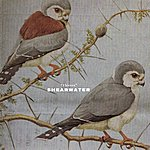 Shearwater Thieves