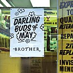 Brother Darling Buds Of May