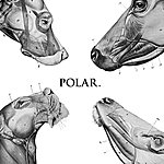 Polar This Polar Noise - Ep