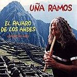 Uña Ramos El Pájaro De Los Andes (Le Pivert Des Andes)