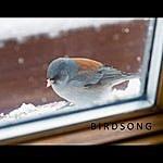 J.B. Birdsong (Gabe's Song)
