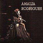 Amália Rodrigues Live