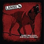 Lambs Short On Leash And Still Running