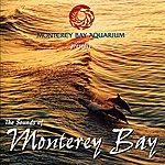 Grant Geissman The Sounds Of Monterey Bay