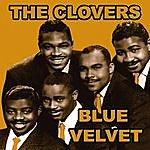 The Clovers Blue Velvet