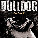 Bulldog Salvaje
