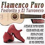 Varios Flamenco Patrimonio De La Humanidad