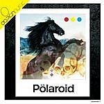 V.A. Polaroid