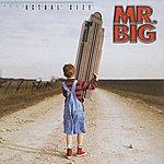 Mr. Big Actual Size