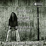 The Hurricane The Voice
