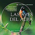 Philippe Bestion Atmosferas Naturales - Las Aves Del Alba