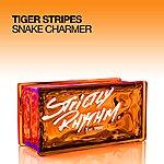 Tiger Stripes Snake Charmer