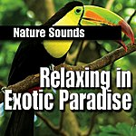 Nature Sounds Relaxing In Exotic Paradise