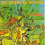 Les Haricots Rouges Les Antilles