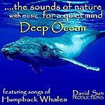 David Sun The Sounds Of Nature With Music For A Quiet Mind: Deep Ocean