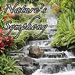 Genesis Nature's Symphony: Music From Outdoors, Nature, Environment, Earth, And Life