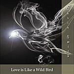 Chris Smith Love Is Like A Wild Bird