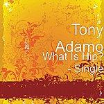 Tony Adamo What Is Hip? - Single