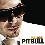 Pitbull Pause