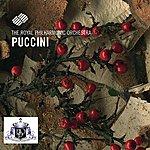 Royal Philharmonic Giacomo Puccini