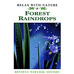 Natural Sounds Forest Raindrops - Relax With Nature 6