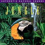 Natural Sounds Jungle - Authentic Natural Sounds