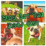 The Big Dogs Who Let The Dogs Out (Baha Men Salute)