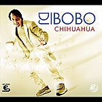DJ Bobo Chihuahua