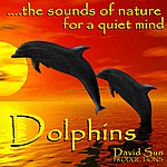 David Sun Dolphins (The Sounds Of Nature For A Quiet Mind)