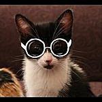 Joe McDermott Kitty Fight (Radio Version)