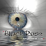 Black Rose Reflections Of Life