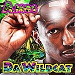 Amos Da Wildcat - Single