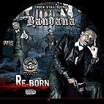 Bandana Re-Born