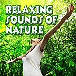 Sounds Of Life Relaxing Sounds Of Nature