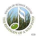 Nature Sounds Sounds Of Russian Nature. The Rhapsody Of A Wild Pond