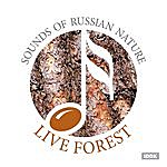 Nature Sounds Sounds Of Russian Nature. Live Forest