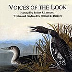 Nature Voices Of The Loon