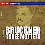 Vienna Chamber Orchestra Bruckner - Three Mottets