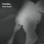 Kate Bush Wild Man