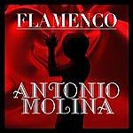 Antonio Molina Flamenco: Antonio Molina