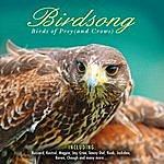 Birds Of Prey Birdsong