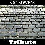 Mystique Wild World: Tribute To Cat Stevens