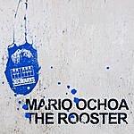 Mario Ochoa The Rooster
