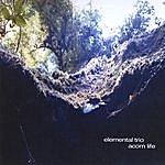 Elemental Acorn Life