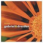 Gabriel & Dresden Bloom