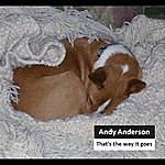 Andy Anderson That's The Way It Goes