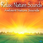 Relax Ambient Nature Sounds