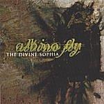 Albino Fly The Divine Sophia