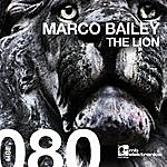 Marco Bailey The Lion